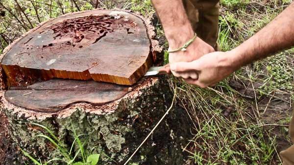 Jeff Zausch preparing logging stump as a fire base